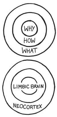 sinek-brain-circles